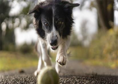 Animais de estimação: acessórios imprescindíveis para o seu cão